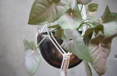 hanging planter, macrame plant pot, golden plant holder, syngonium Black Clay, Hanging Planters, Plant Holders, Potted Plants, Macrame, Organic, Rustic, Ceramics, Things To Sell