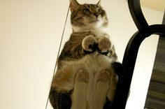 cat on glass!