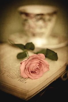 Image about rose in flowers 💐🌺🌹💗 by Radhika Gatpandan Book Flowers, Paper Flowers, Still Life Photography, Book Photography, Beautiful Flowers, Beautiful Pictures, Girly Pictures, Deco Rose, Vintage Romance