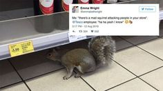 Badass squirrel invades British store browses red wine selection