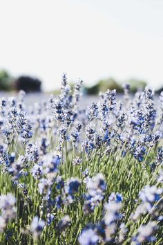 Meadow, blue, small flowers, flora wallpaper – Best of Wallpapers for Andriod and ios Frühling Wallpaper, Flower Phone Wallpaper, Cute Wallpaper Backgrounds, Pretty Wallpapers, Nature Wallpaper, Iphone Spring Wallpaper, Spring Flowers Wallpaper, Phone Backgrounds, Iphone Wallpapers