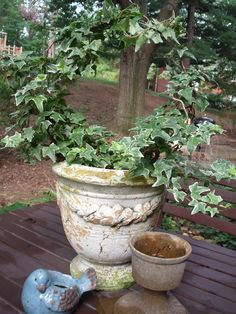 The French Hens Nest: Easy Ivy Topiary Topiary Plants, Ivy Plants, Indoor Plants, Topiaries, Container Plants, Container Gardening, Garden Urns, Topiary Garden, Flower Tower