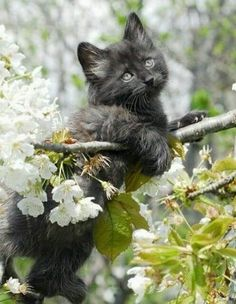 Jaro a kotě