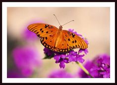 'Butterfly' by Craig Tuttle Framed Photographic Print