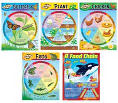 Life Cycles Learning Chart Combo Pack, T-38934