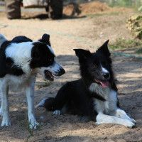 #dogalize Malattie ereditarie del cane, le patologie più comuni #dogs #cats #pets