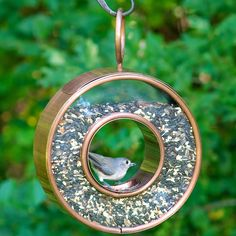 Get Bird-Watching With One of These Feeders