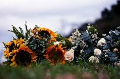 girasoles en el cementerio - Buscar con Google Google, Flowers, Plants, Cemetery, Sunflowers, Plant, Royal Icing Flowers, Flower, Florals