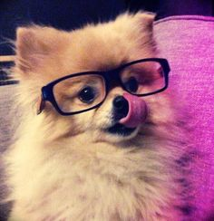 Hipster pup is hungry