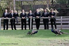 The groomsman were able to catch a few of the zoo's roaming peacocks in their photo on October Photo courtesy of Captured Moments Photography. Zoo Photos, October 5th, Unique Settings, Outdoor Venues, Peacocks, Groomsmen, Big Day, Perfect Wedding, Indoor Outdoor