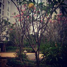 #park #flowerstyles_gf #flowers #flowerlovers #flower #gardeningtips #instagardeners #garderner #gardening #gardener #instamood by dsastropadi.zh