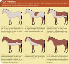 Good insight to the Whys, Whats, Hows about clipping your horse  www.HappyHorseHealthyPlanet.com