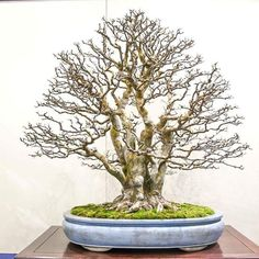 #bonsai #trees