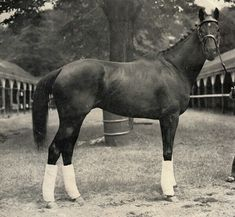 Noor defeated 2 Triple Crown winners, Citation and Assault.
