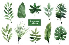 Watercolor tropical leaves by lenlis on @creativemarket