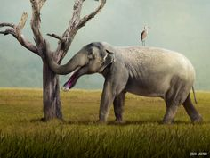 """paleoart: """"  New studies suggest the weird Platybelodon could have used its shovel-like lower teeth to eat tough plant matter, including tree bark. See more at Earth Archives. """""""