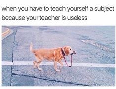 When you have to teach yourself a subject because your teacher is useless