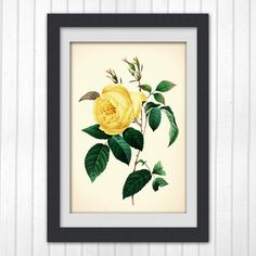 art print, yellow flower print 123, produced from a vintage illustration upcycled from a bookplate.