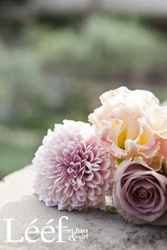Winter, tyd/time, sagte pienk rose/soft pink roses. Foto: Candice Askham www.leef.co.za Hart, Afrikaans, Pink Roses, Photo S, Florals, Plants, Teacher, Printables, Craft Ideas