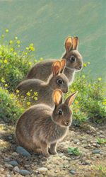 Limited edition prints by Andrew Hutchinson - Andrew Hutchinson - wildlife artist