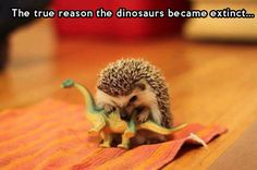 Why dinosaurs became extinct...