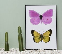 Home Decor, Butterfly, Nature, Insect, Summer #homedecor, #butterfly, #nature, #insect, #summer