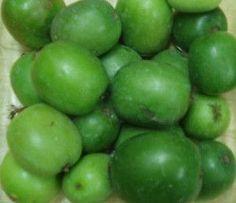 Baby Kiwi Seeds (Actinidia arguta) + FREE Bonus 6 Variety Seed Pack - a $30 Value!