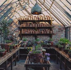 Gorgeous glasshouse and growing place for plants and people.