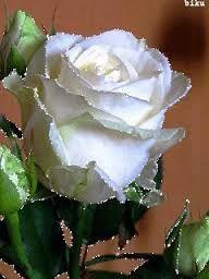 Resultado de imagen para rosas en gif