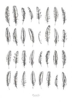 Feather tattoo options, I like some of the beat up looking ones because they cou