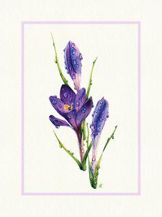 Watercolor Purple Crocus  8x10 fine art print by NebelsWatercolor, $23.00