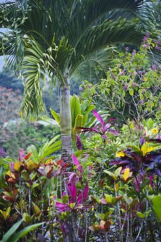 Tropical Foliage in Arenal, San Carlos, Costa Rica, Central America