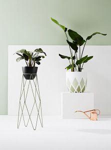Mis plantas en un pedestal | Decoración