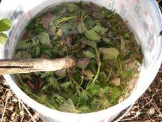 Die Brennnessel wird von vielen Gärtnern als Unkraut verflucht. Dabei ist sie das Perfekte Grundmittel für einen ökologischen Dünger zum Selbermachen!