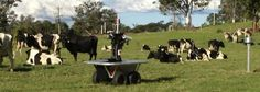 Robot Cowboys Herd Cattle . . . (They should replace the cows with robots too. Equip 'em with that lab grown beef. =P)
