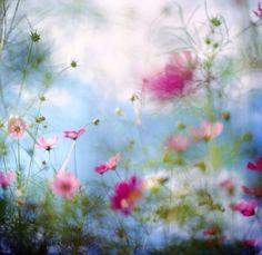 夢のような朝の庭