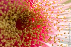Krishna Espaço Elemental floraes Arvore da vida