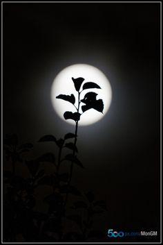 A lua que ilumina a beleza do noso entorno