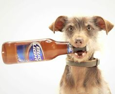 Pin by teresa brown on my loves pinterest starring a rescue dog t shirt bud light mozeypictures Choice Image
