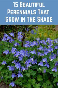 Best Perennials For Shade, Flowers Perennials, Planting Flowers, Shade Flowers Perennial, Plants That Like Shade, Cool Plants, Flowers For Shade, Shade Garden Plants, Cottage Garden Plants