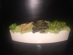 Succulents arrangement boat shaped ceramic vase table top decor by AwsomeAccents on Etsy https://www.etsy.com/listing/279581634/succulents-arrangement-boat-shaped