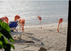 I want to see flamingos on the beach and not just at the zoo.