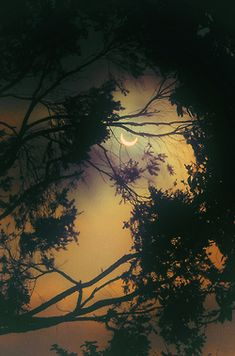 love the moon through the trees