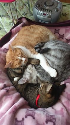 ❤️Aww, to think they will grow old together in a loving family like - All Pet's Should, is a wonderful thought.