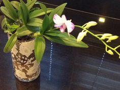 Singapore, Glass Vase, Bathrooms, Home Decor, Decoration Home, Bathroom, Room Decor, Bath, Interior Decorating