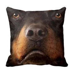 >>>Hello          Pillow pet dog 4           Pillow pet dog 4 We provide you all shopping site and all informations in our go to store link. You will see low prices onHow to          Pillow pet dog 4 please follow the link to see fully reviews...Cleck Hot Deals >>> http://www.zazzle.com/pillow_pet_dog_4-189837932172948096?rf=238627982471231924&zbar=1&tc=terrest