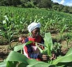 "After studying land deals in Ethiopia, Tanzania, South Sudan, Sierra Leone, Mozambique, & Mali, Oakland Institute released a report that hedge funds & foreign firms are acquiring large swathes of African land often w/out proper contracts & displacing millions of small farmers, causing hunger in Africa. Foreign firms consolidate hold over global food markets, exporting biofuels & flowers. ""This is creating insecurity in the global food system that could be a much bigger threat than…"