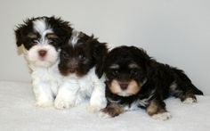 """Buddy, Maggie and Price """"Going Home"""" Picture"""