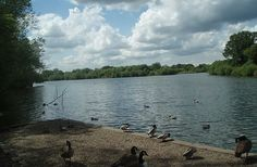 Dinton Pastures Country Park