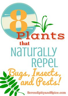 8 Plants to Repel Bugs, Insects, and Pests ~ http://serendipityandspice.com